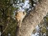 leopard-9501