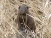 mongoose-common-1685