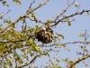 nest-little-5459
