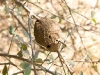 nest-mud-5485