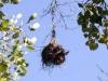 nest-weaver-6087