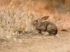rabbit-9396