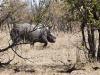 rhino-running-away-8991