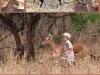 safari-sample-page