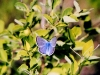 blue-copper