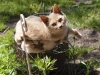 cat-in-flower-stand-8600