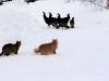 cats-stalking-turkeys