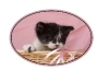 kitten-in-pink