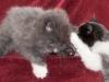 kitty-secrets