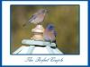 anniversary-bluebirds