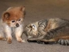 dog-and-cat-4573
