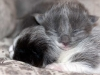 kitten-8-days