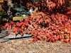 fall-leaves-over-rail-fence
