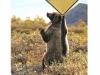 friendship-bear