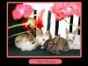 friendship-bunnies