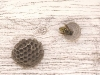 sandhills-hornet-building-nest-day-2