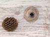 sandhills-hornet-building-nest-day-7