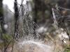 spider-web-5