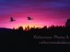 ducks-in-sunset