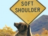 bear-soft-shoulder