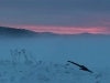 foggy-sunset-panorama