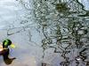 mallard-and-reflections