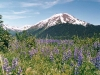 mountain-with-lupine