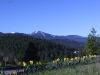 mt-spokane-wdaffodils