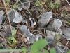 grey-mushroom-or-fungi