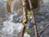 tree-lichen-8352