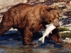 bear-with-fish